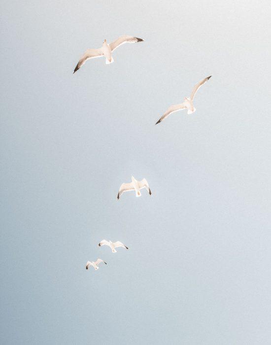 ©MAXIME-ARTENZO-MOUETTES-MAROC